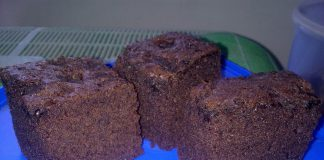 Black Brownies by Cincha Sheehan