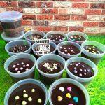 Brownies Lumer by Senny Vieta Fu Senli